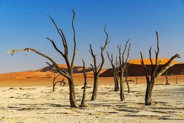 NAM6621AWRF Old dead trees, Deadvlei, Namib-Naukluft National Park, Sesriem, Namibia