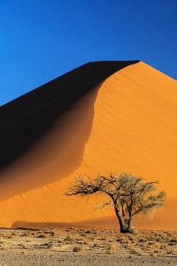 NAM6624AWRF Sand dune, Namib-Naukluft National Park, Sesriem, Namibia