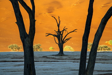 NAM6646AW Old dead trees, Deadvlei, Namib-Naukluft National Park, Sesriem, Namibia