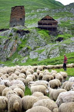 HMS3372972 Georgia, Kakheti, Tusheti National Park, Alazani River Valley in the mountains of Pirikiti, village of Parsma (Baso), shepherd and his flock of sheep