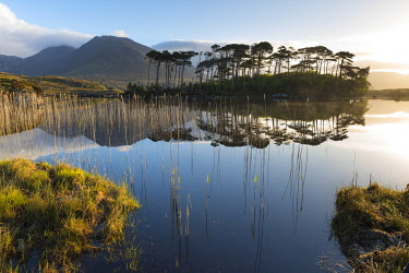 HMS3332992 Ireland, County Galway, Connemara National Park, Derryclare Lake at sunrise, Twelve Bens in the background