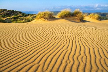 HMS3373742 Portugal, Algarve region, Southwest Alentejano and Costa Vicentina Natural Park, Carrapateira on the Rota Vicentina hiking trail, dunes area (Medo das Angras)
