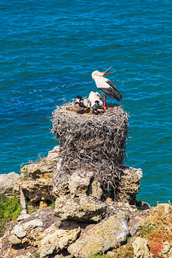 HMS3374097 Portugal, Alentejo region, Southwest Alentejano and Costa Vicentina Natural Park, the hike Rota Vicentina between Vila Nova de Milfontes and Porto Covo on the fishermen trail, stork nest