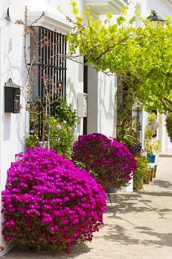 HMS3287202 Spain, Andalucia, Cadiz Province, Zahara de la Sierra, Sierra de Grazalema natural parc, Ruta de los Pueblos Blancos (white villages road), flowers in a street of the village