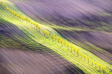 CZE2110AW The rolling hills of Moravia in spring, Czech Republic