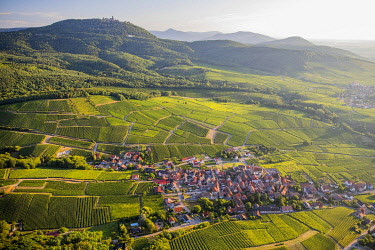 HMS3524938 France, Haut Rhin, on the Wine road of Alsace, Rodern village and Haut Koenigsbourg castle (aerial view)