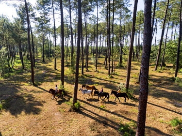 HMS3438884 France, Gironde, Val de L'Eyre, Parc Naturel Régional des Landes de Gascogne, horseback ride with Caballo Loco, a Chilean family specializing in equestrian art(aerial view)