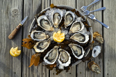 HMS3446324 France, Gironde, Bassin d'Arcachon, oysters platter