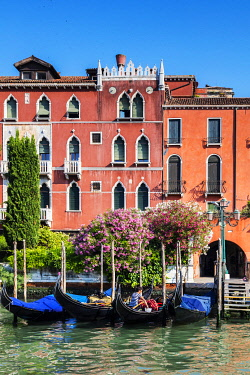 ITA14916 Italy. Veneto. Venice. Gondolas on the Gran Canal.