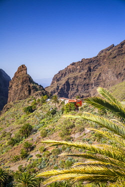 ES09640 Spain, Canary Islands, Tenerife Island, Masca, elevated village view, morning