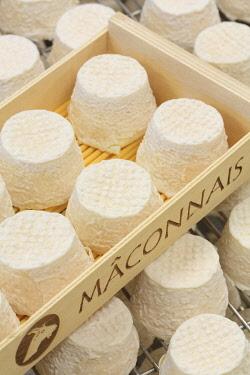 HMS3437928 France, Saone et Loire, Hurigny, Chevenet cheese dairy, Maconnais (AOP cheeses made from raw goat's milk)