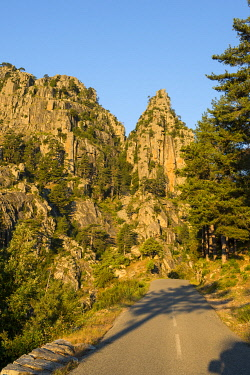HMS3409113 France, Haute Corse, Corte, Restonica Valley, sunrise in the gorges and pine forest and Mount Leonardo