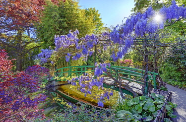HMS3339193 France, Eure, Giverny, Claude Monet foundation, the japonese garden with wisteria in blossom