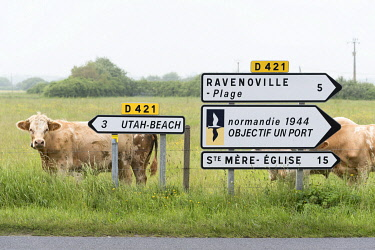 HMS3561136 France, Manche, Cotentin, Sainte Marie du Mont, road sign to Utah Beach on Road D421, cows in the fields