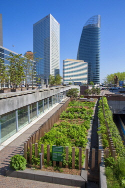 HMS3420792 France, Hauts de Seine, suburbs of Paris, La Défense, the Garden of the Ark, shared garden, this flower garden, edible and ecological offers 200m _ of exploitable green spaces. It is cultivated by it...