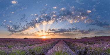 HMS3332160 France, Alpes de Haute Provence, Verdon Regional Nature Park, Puimoisson, field of lavender (lavandin) at sunset on the Plateau de Valensole