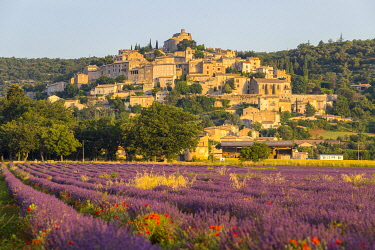 HMS3410648 France, Alpes de Haute Provence, Simiane la Rotonde, lavender field at the foot of the village