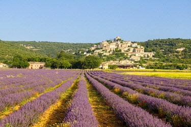 HMS3410651 France, Alpes de Haute Provence, Simiane la Rotonde, lavender field at the foot of the village