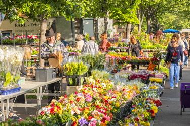 HMS3272496 France, Bouches du Rhone, Marseille, avenue du Prado, the Flower Market