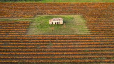 HMS3436642 France, Vaucluse, Luberon Regional Nature Park, Cucuron, vineyard