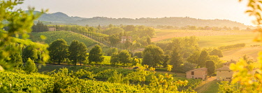 ITA14948AW Castelvetro di Modena, panoramic view of hills and green trees at sunset. Emilia Romagna, Italy