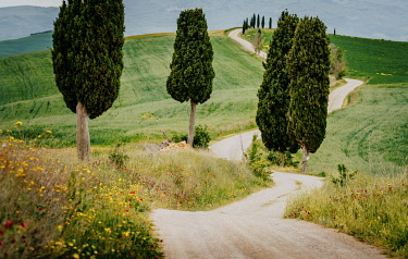 ITA14958AW Path with cypress trees and meadow, Val d'Orcia, Tuscany, Italy