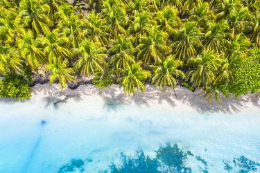 CLKAC116258 Zapatilla island, Bastimentos, Bocas Del Toro, Panama, Central America