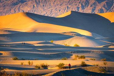 CLKST117378 Mesquite flat sand dunes, Death Valley National Park, California, USA