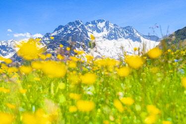 CLKFS114502 Meadows and Monte Disgrazia, Alpe dell Oro, Valmalenco, Valtellina, province of Sondrio, Lombardy, Italian alps, Italy