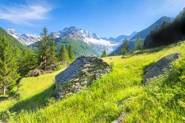 CLKFS114512 Pastures of Ca Novi, Valmalenco, Valtellina, province of Sondrio, Lombardy, Italian alps, Italy