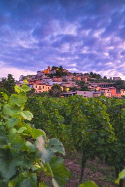 CLKMR114846 Corte de Lantieri winery, Brescia province, Lombardy district, Italy Europe