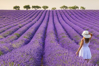 CLKMC114351 A woman in white dress in the fields of lavender near Valensole, Alpes-de-Haute-Provence, Provence-Alpes-Côte d'Azur, France. (MR)