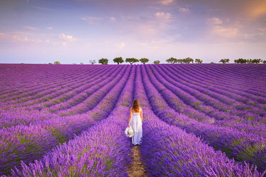 CLKMC114438 A woman in white dress in the fields of lavender near Valensole, Alpes-de-Haute-Provence, Provence-Alpes-Côte d'Azur, France. (MR)