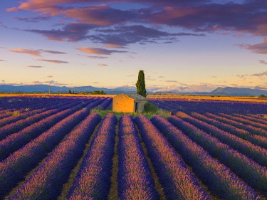 FRA11599AW France, Provence Alps Cote d'Azur, Haute Provence, Valensole Plateau, Lavender Field and stone barn at dusk
