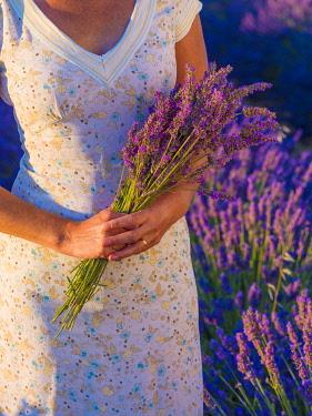 FRA11603AW France, Provence Alps Cote d'Azur, Haute Provence, Valensole Plateau, woman holding a bouquet of lavender (MR)