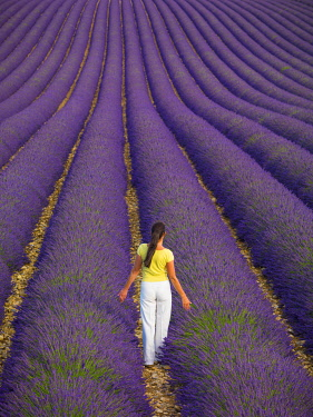 FRA11655AWRF France, Provence Alps Cote d'Azur, Haute Provence, Valensole Plateau, woman walking through lavender Field (MR)