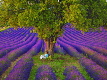 FRA11622AW France, Haute Provence, Provence, Sault Plateau, Rows of lavender with woman sitting against single tree (MR)
