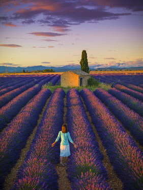 FRA11627AW France, Provence Alps Cote d'Azur, Haute Provence, Valensole Plateau, woman walking through Lavender Field with stone barn (MR)
