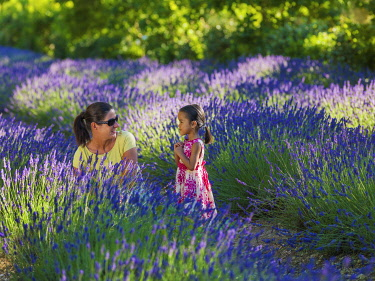 FRA11638AW France, Provence, Vaucluse, Gordes, Senanque abbey, woman and girl looking at lavender (MR)