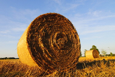 IBXCLX01264560 Straw bales, round bales on a harvested grain field, Lower Saxony, Germany, Europe