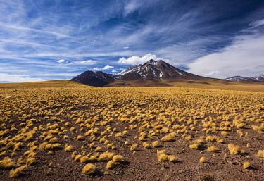 IBXMBI04546871 Andean Plain, Puna Grasland, Jarava ichu, Volcan Mioiques, Altitude 5910m, View of Ruta 23, San Pedro de Atacama, El Loa Province, Antofagasta Region, Norte Grande, Chile, South America