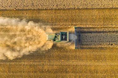 IBXMOX04954925 Aerial view, combine harvester, driving in the evening sun over a dry field with a lot of dust, Wetterau, Hesse, Germany, Europe