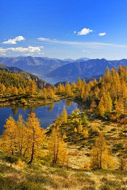 IBXSHU04803287 Larches (Larix) in autumn colour at the Laghetto dei Salei, Onsernone valley, Canton Ticino, Switzerland, Europe