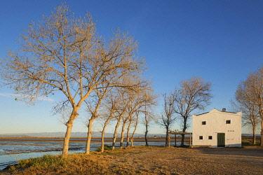 IBXTDR04933893 Flooded rice field and small farm cottage, Ebro Delta Nature Reserve, Tarragona province, Catalonia, Spain, Europe