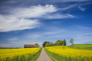 SW03149 Sweden, Southeast Sweden, Bergs Slussar, springtime landscape with country road