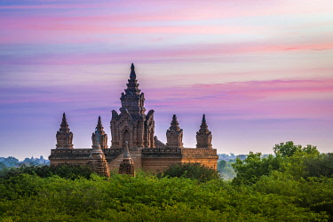 MYA2463AW Old pagoda amidst trees against purple sky during sunrise, Bagan, Mandalay Region, Myanmar