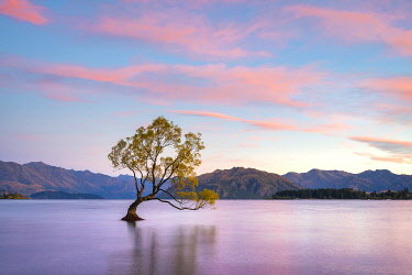 NZ9508AW Lone tree in Roys Bay on Wanaka Lake against sky at sunrise, Wanaka, Queenstown-lakes District, Otago Region, South Island, New Zealand