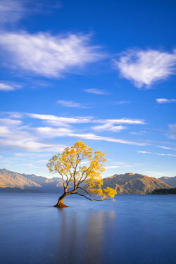 NZ9513AW Lone tree in Roys Bay on Wanaka Lake, Wanaka, Queenstown-lakes District, Otago Region, South Island, New Zealand