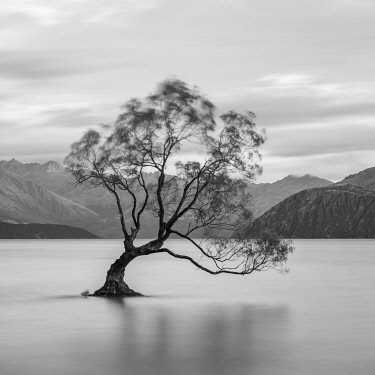 NZ9515AW Popular lone tree in Roys Bay on Wanaka Lake, Wanaka, Queenstown-lakes District, Otago Region, South Island, New Zealand