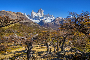 ARG3127AWRF Fitz Roy mountain viewed from trail in autumn, Los Glaciares National Park, El Chalten, Santa Cruz Province, Argentina